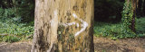 Close-up of an Arrow Sign Painted on a Tree, San Francisco, California, USA Photographic Print by  Panoramic Images