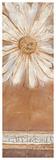 Flower Power II Prints by Kerry Darlington