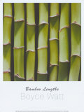 Bamboo Lengths Affiches par Boyce Watt