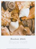 Beachside Shells Prints by Boyce Watt