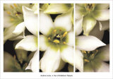 Star of Bethlehem Triptych Prints by Andrew Levine