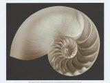 Ocean Keepsake II Poster by Charles Britt