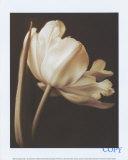 Champagne Tulip I Affiches par Charles Britt