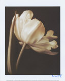 Champagne Tulip I Prints by Charles Britt