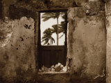 Palm View I Poster by C. J. Groth