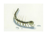 The Extinct Hallucigenia Is Depicted with Both Spines and Legs Giclee Print by Kam Mak