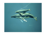 A Humpback Whale and Her Calf Swimming Underwater Giclee Print by Richard Ellis
