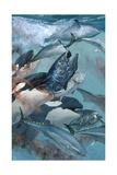 A Giant Atlantic Bluefin Tuna Falls Prey to a Killer Whale Wydruk giclee autor Stanley Meltzoff