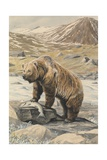 An Alaskan Brown Bear with a Salmon it Caught in a Nearby River Giclee Print by Louis Agassi Fuertes