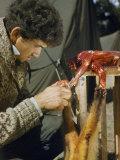 Mammologist Skins a Yellow-Throated Himalayan Marten Photographic Print by Volkmar K. Wentzel