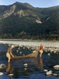 Western Scientists Wading in River Use Net to Search for Fish Species Photographic Print by Volkmar K. Wentzel