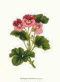 Pink Geranium I Print by  Van Houtt