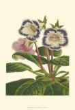 Gloxinia Garden I Prints by  Van Houtt