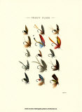 Trout Flies I Prints