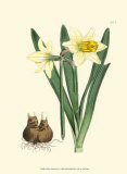Yellow Narcissus II Kunst von Van Houtt 