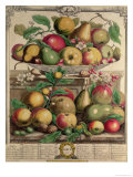 "March, from ""Twelve Months of Fruits"", by Robert Furber, 1732 Giclee Print by Pieter Casteels"