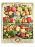 "September, from ""Twelve Months of Fruits"", by Robert Furber, 1732 Giclee Print by Pieter Casteels"