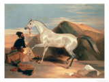 Arab Stallion Giclee Print by Edwin Henry Landseer