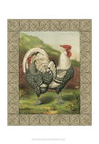 Roosters III Posters by Cassell&#39;s Poultry Book 
