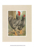 Roosters with Mat II Prints by  Cassell's Poultry Book