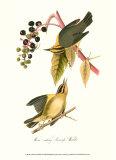 Warbler Posters par John James Audubon