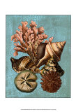 Shell and Coral Collection on Aqua I Prints