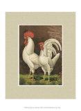 Roosters with Mat VI Arte di  Cassel