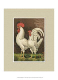 Roosters with Mat VI Art by  Cassell's Poultry Book