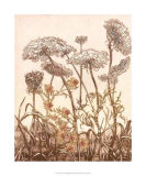 Field of Lace II Prints by B. Dauman