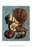 Shell and Coral Collection on Aqua II Prints