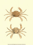 Antique Crab III Posters af James Sowerby