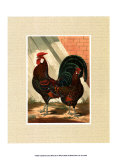 Roosters with Mat V Posters by  Cassell's Poultry Book