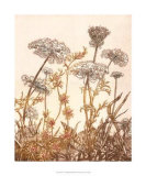 Field of Lace I Giclee Print by B. Dauman