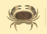 Antique Crab IV Prints by James Sowerby