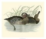 Morris Ducks II Giclee Print by Reverend Francis O. Morris