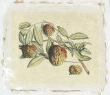 Botanical IV Premium Giclee Print by  Van Rheet
