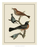 Bird Family I Giclee Print by A. Lawson