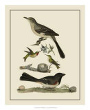 Bird Family V Giclee Print by A. Lawson