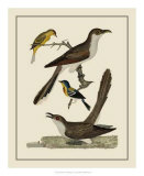 Bird Family VI Giclee Print by A. Lawson