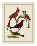 Bird Family IV Giclee Print by A. Lawson