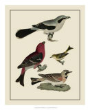 Bird Family II Giclee Print by A. Lawson