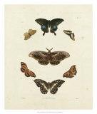 Butterflies III Giclee Print by George Wolfgang Knorr
