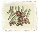 Botanical I Premium Giclee Print by  Van Rheet