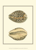 Leopard Cowry Shells Posters by George Shaw