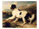 Newfoundland Dog Called Lion, 1824 Giclee Print by Edwin Henry Landseer