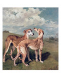 Greyhounds Giclee Print by John Emms