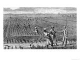 Hoeing Rice, from &quot;Harper&#39;s Weekly&quot;, 1867, from &quot;The Pageant of America, Vol.3&quot;, by Gabriel, 1926 Reproduction proc&#233;d&#233; gicl&#233;e par Alfred Rudolf Waud