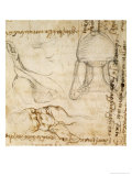 Page from a Sketchbook with Figure Studies and Notes Giclee Print by  Michelangelo Buonarroti