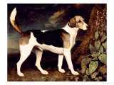 Ringwood, a Brocklesby Foxhound, 1792 Giclee Print by George Stubbs