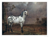 The Piebald Horse, 1653 Giclee Print by Paulus Potter